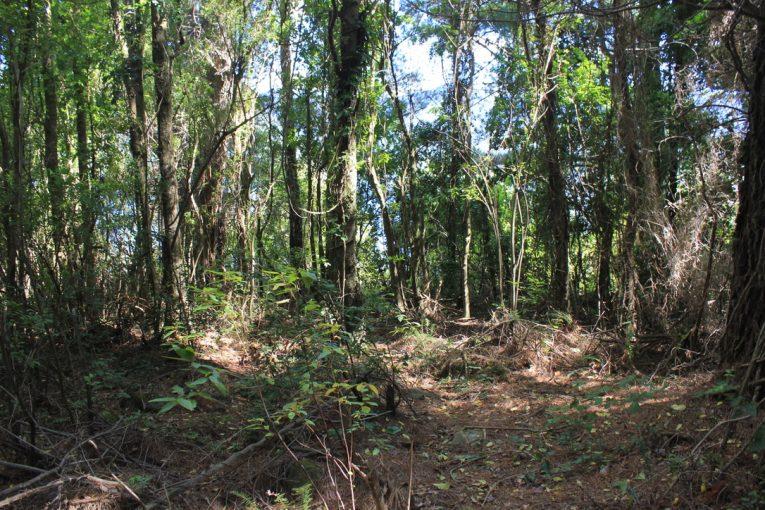 Bosque dentro del terreno