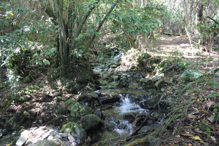 Estero que baja por la propiedad hasta el lago 1