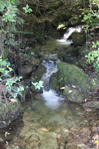 Estero que baja por la propiedad hasta el lago