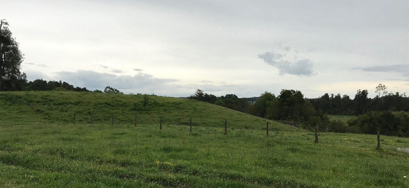 Zona de alta pluviometría con pasto verde el año redondo