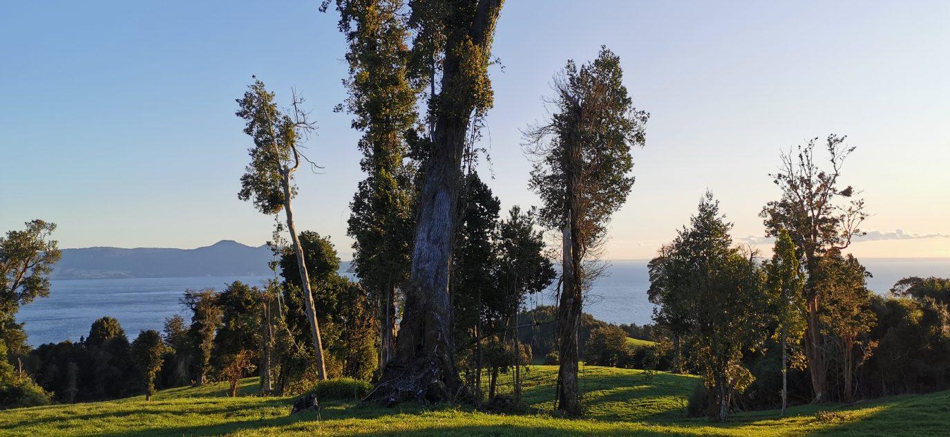 Reserva de Bosque nativo con especies milenarias