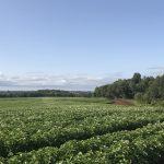 Propiedad agrícola en las tierras de la colonización alemana