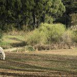 Propiedad agrícola cerca del lago Rupanco