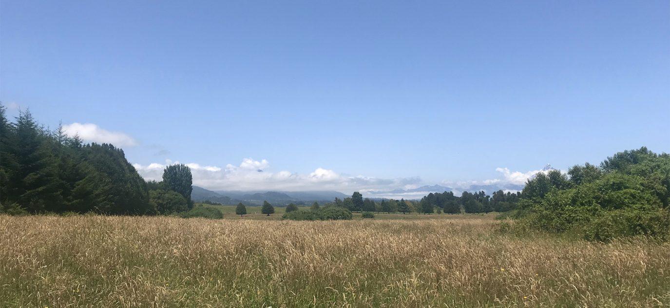 Campo agrícola ganadero