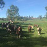 Fundo dedicado a la crianza de ganado