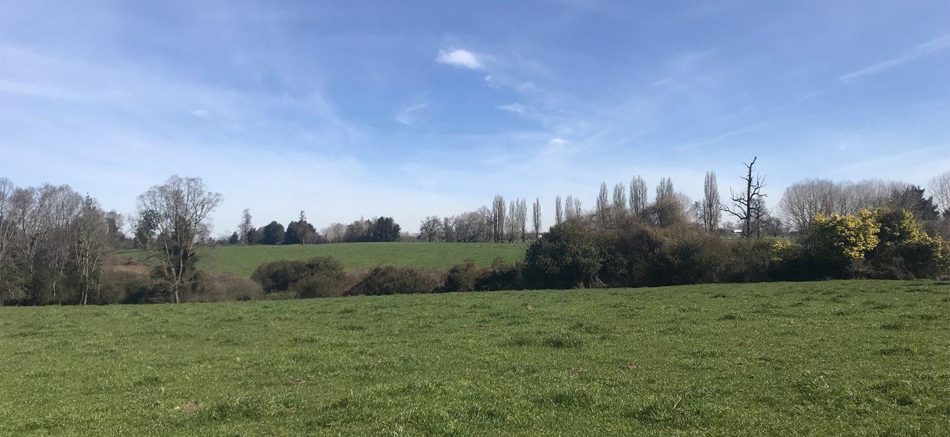 Vista al campo